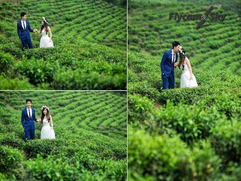 Điểm quay phim cưới ngoại cảnh- Đồi chè Cầu Đất