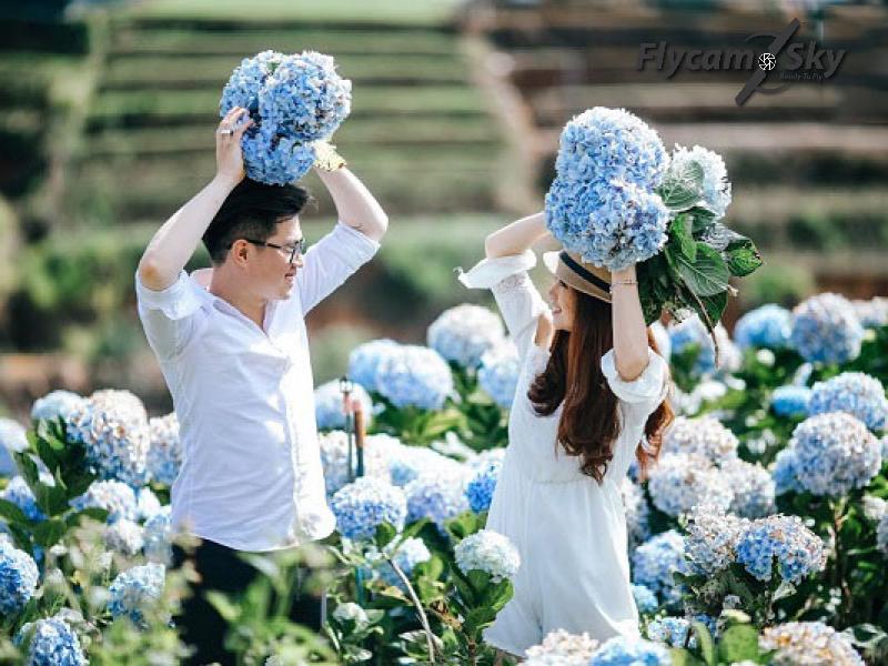 Vườn cẩm tú cầu Lạc Dương điểm chụp cưới lãng mạn